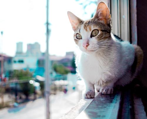 Rosin Tiergesundheit Fenstersturz Katze