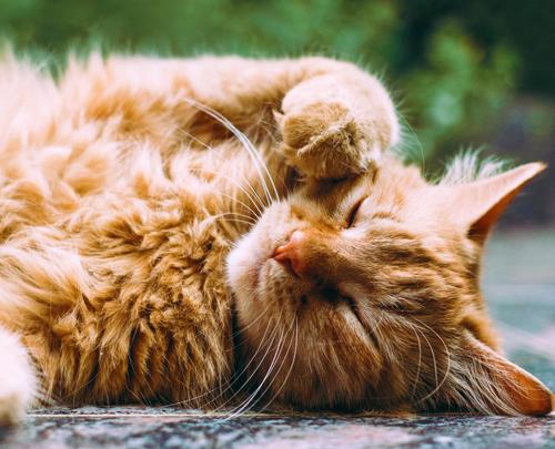 Rosin Tiergesundheit Physiotherapie bei der Katze
