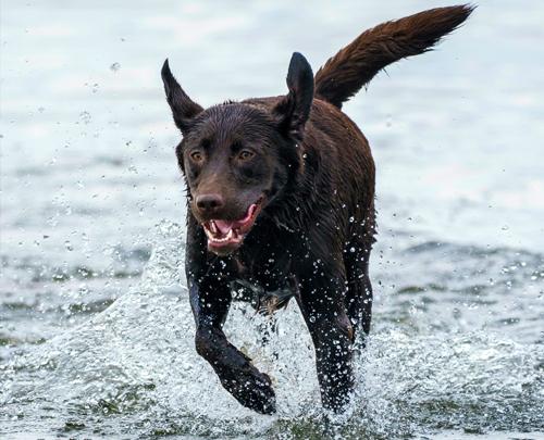 Rosin Tiergesundheit - Schmerzen beim Hund