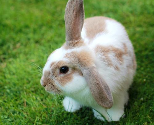 Rosin Tiergesundheit - Myiasis – Gefährlicher Befall mit Fliegenmaden beim Kaninchen
