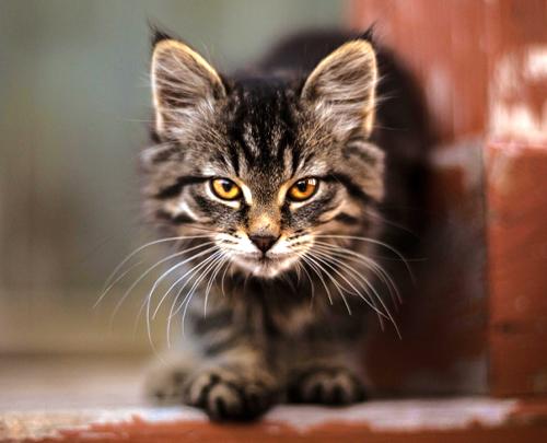 Rosin Tiergesundheit - Blog - Katzenbiss