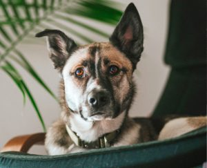 Rosin Tiergesundheit - Blog - Silvester