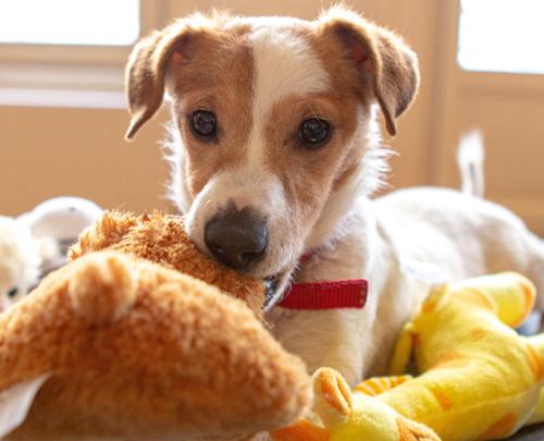 Rosin Tiergesundheit - Blog - Scheinträchtigkeit