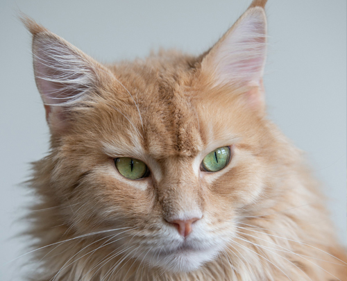 Rosin Tiergesundheit - Blog - chronische Niereninsuffizienz