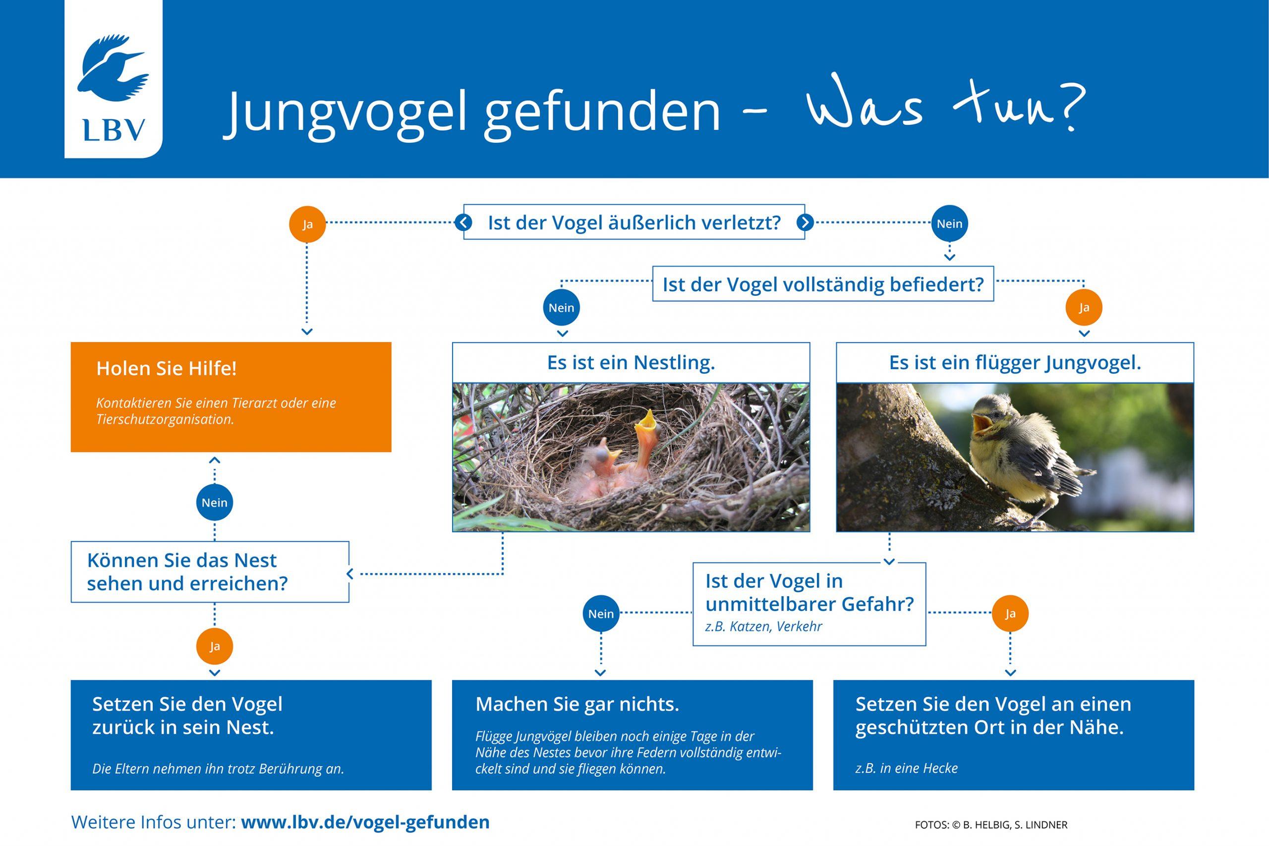 Rosin Tiergesundheit - Blog - Jungvogel gefunden – was tun?