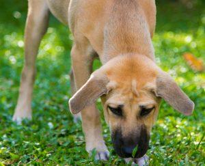 Rosin Tiergesundheit - Blog - Hunde Gras fressen