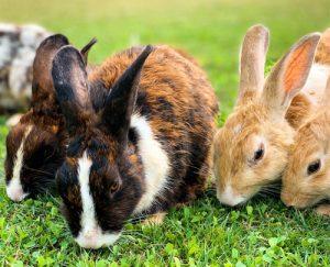 Rosin Tiergesundheit - Blog - Kaninchenhaltung