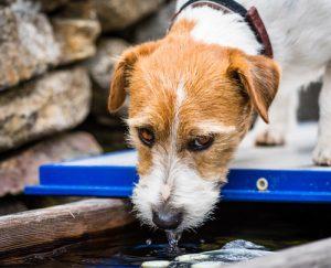 Rosin Tiergesundheit - Blog - Pyometra der Hündin